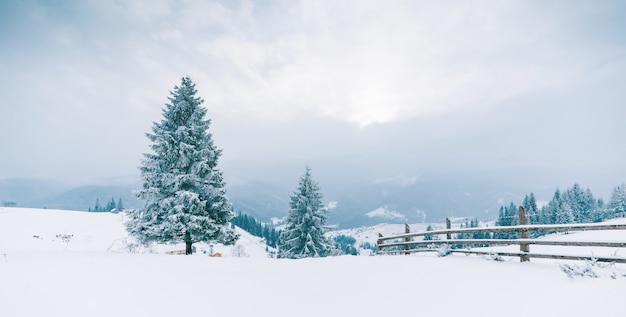 Drzewa w górach. zimowe góry
