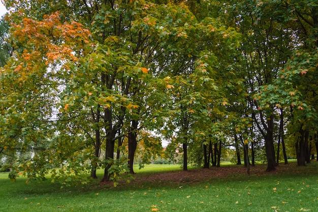 Drzewa w parku miejskim jesień