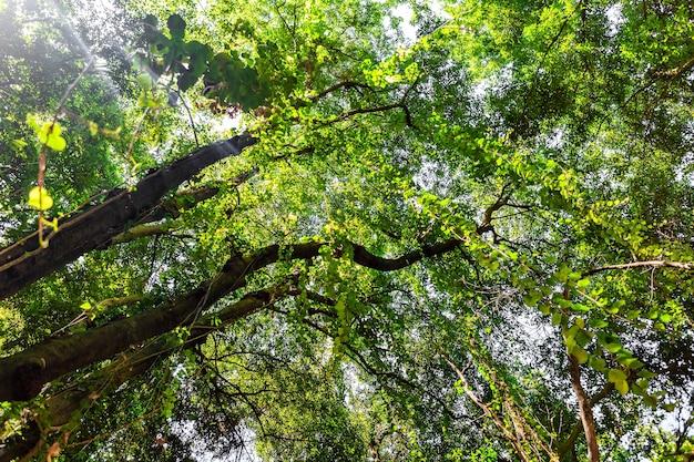 Drzewa w parku przyrody na wyspach kanaryjskich