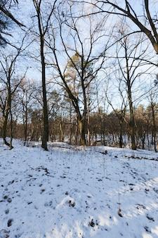Drzewa w sezonie zimowym po opadach śniegu. dzień słoneczny i mroźny