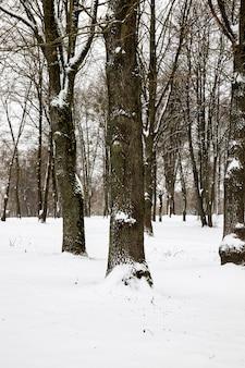Drzewa w sezonie zimowym w lesie