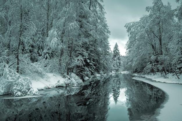 Drzewa w śniegu nad brzegiem leśnej rzeki