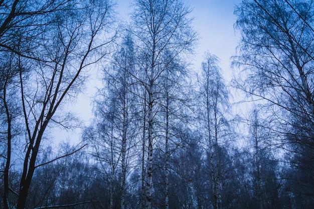 Drzewa w winter park