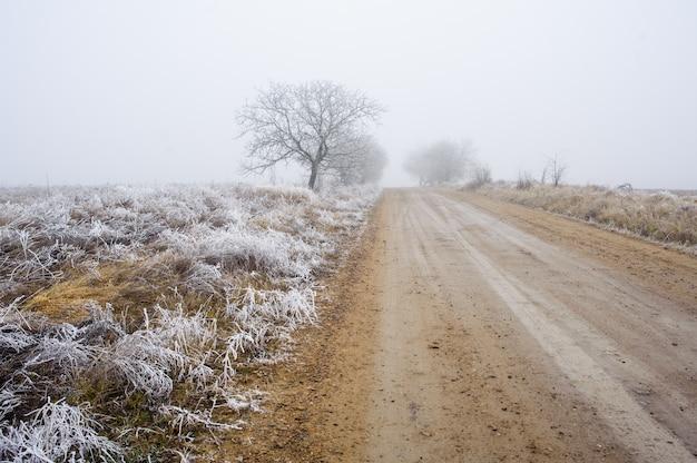 Drzewa w zamglonej mgle
