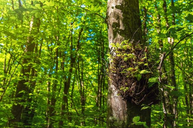 Drzewa w zielonym lesie