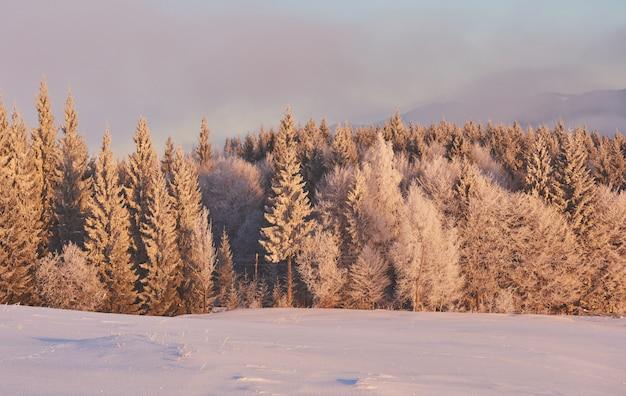 Drzewa w zimowym krajobrazie, tło z delikatnymi akcentami i płatki śniegu
