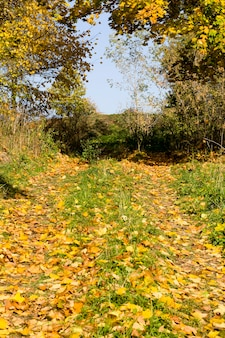 Drzewa wczesną jesienią
