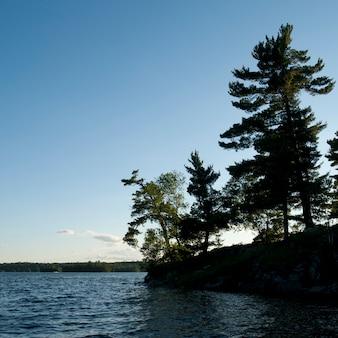 Drzewa wzdłuż linii brzegowej w lake of woods, ontario