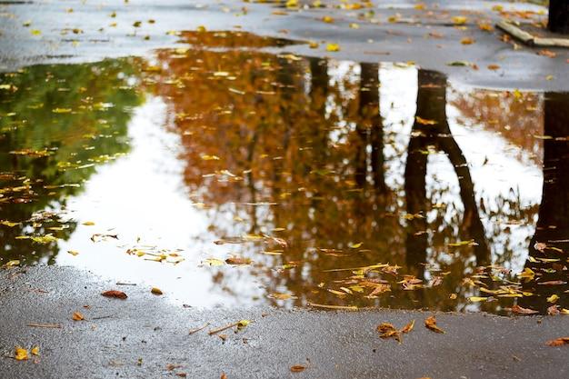 Drzewa z brązowymi jesiennymi liśćmi odbijają się w kałuży podczas deszczu