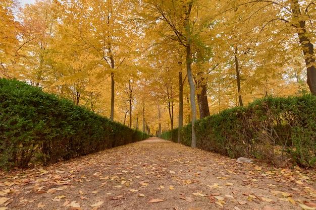 Drzewa z brązowymi liśćmi w ogródzie w jesieni