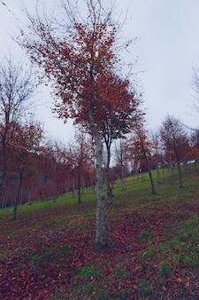 Drzewa z czerwonymi liśćmi w górach