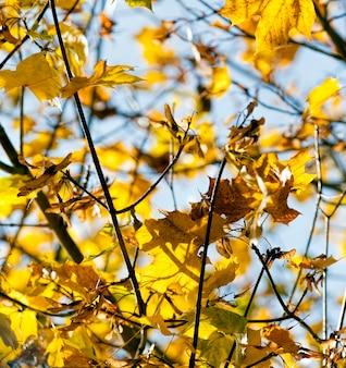 Drzewa z liśćmi