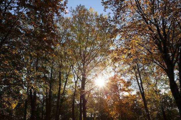 Drzewa z pożółkłych liści jesienią park w słońcu. sfotografowany na niebieskim tle nieba.