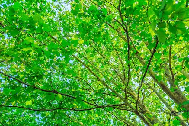 Drzewa z zielonymi liśćmi
