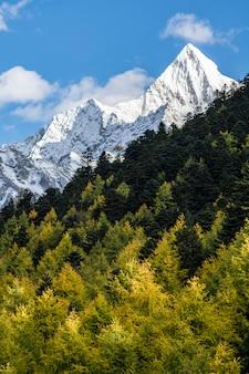 Drzewa z żółtymi liśćmi w jesieni i górze, yading, chiny
