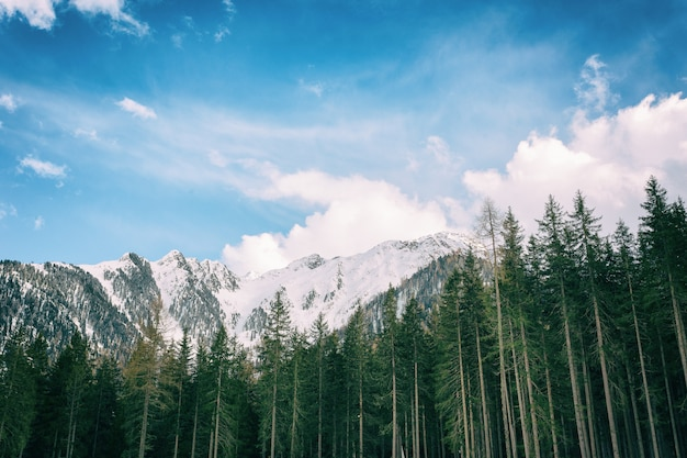 Drzewa zielone liści z snowy górskich tle