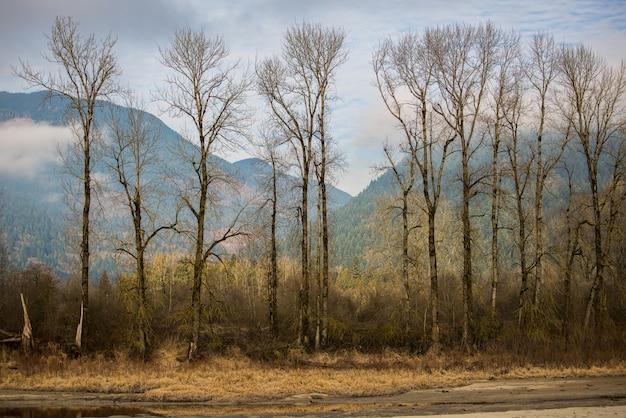 Drzewa zielone liściowe przez góry