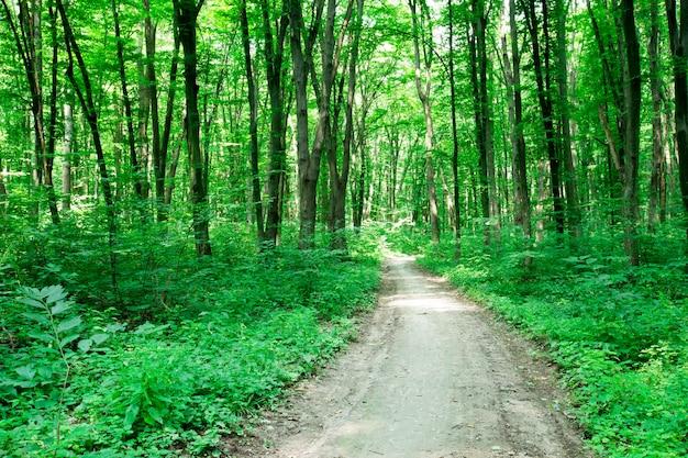 Drzewa zielonego lasu. natura zielony drewno światło słoneczne tła
