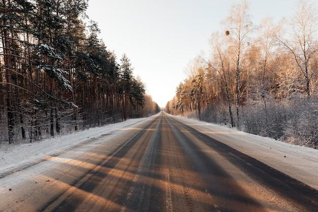 Drzewa zimą w lesie, słoneczna pogoda, fotografia, tory na asfaltowej drodze