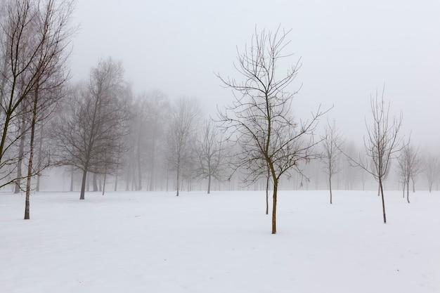 Drzewa zimą zamarznięty krajobraz