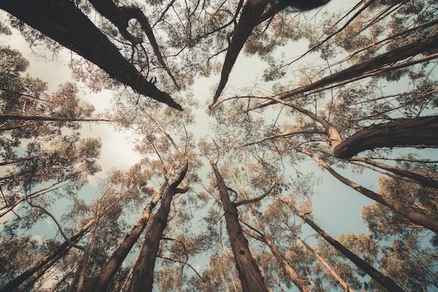 Drzewa zrobione pod kątem nadirowym
