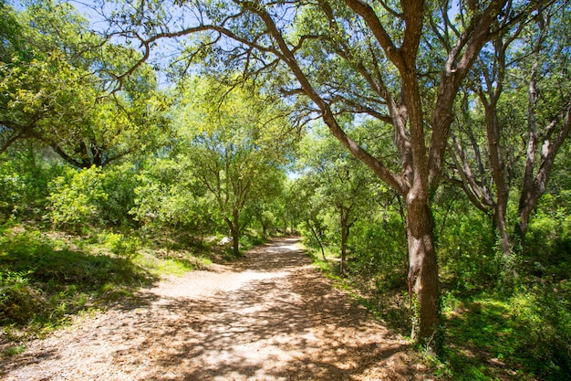Drzewka leśne menorca w cala en turqueta ciudadela