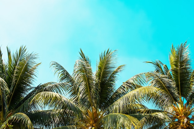 Drzewko palmowe na niebieskim niebie z światła słonecznego tłem