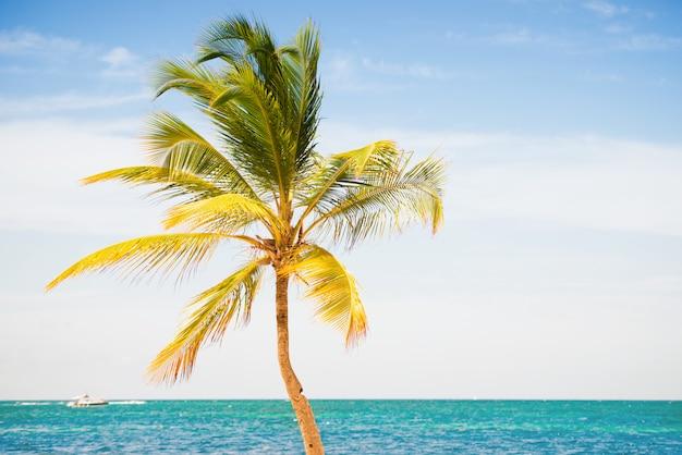 Drzewko palmowe na tle nieba i morza