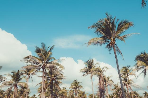 Drzewko palmowe na tropikalnej plaży z niebieskim niebem i światłem słonecznym w lecie