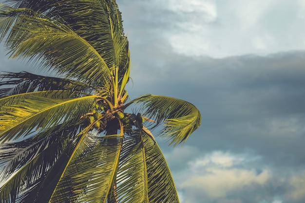 Drzewko palmowe w wiatrze z ciemną chmurą