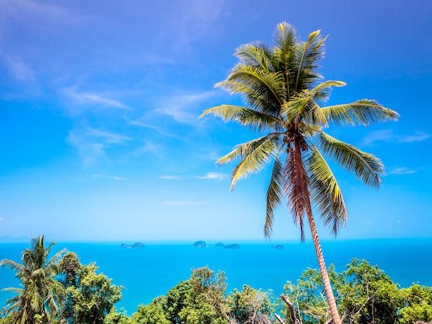 Drzewko palmowe z niebieskim niebem