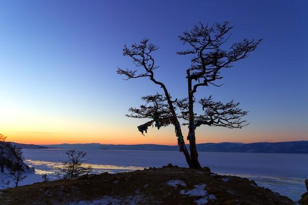 Drzewna sylwetka na faleza skałach i zmierzch nad natura krajobrazem