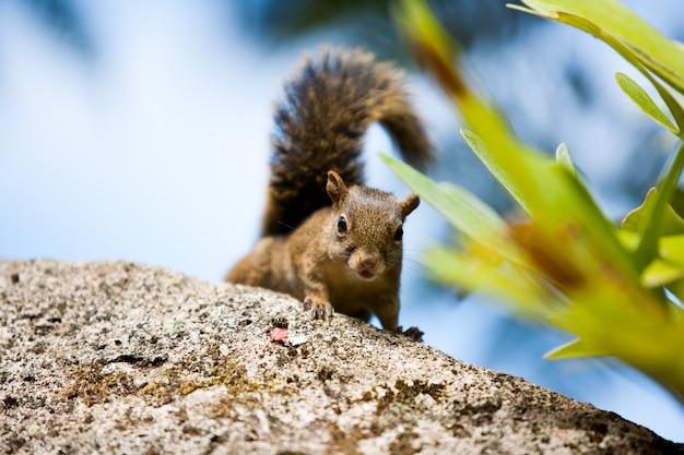 Drzewna wiewiórka patrzeje fotografa