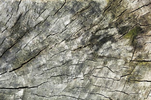 Drzewnego bagażnika drewniany tło i zieleni plamy