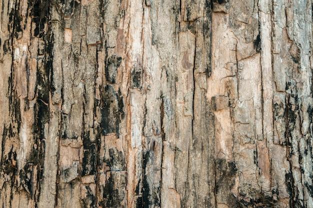 Drzewnej barkentyny tekstury tło