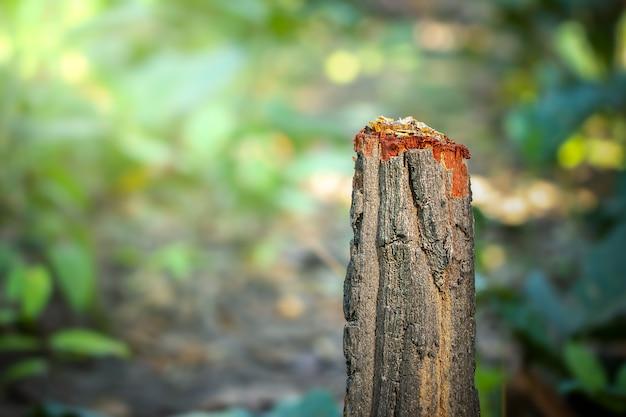 Drzewny fiszorek i zieleni naturalny tło w lesie. pojęcie ochrony przyrody i globalnego ocieplenia. kampania mająca na celu powstrzymanie wylesiania.