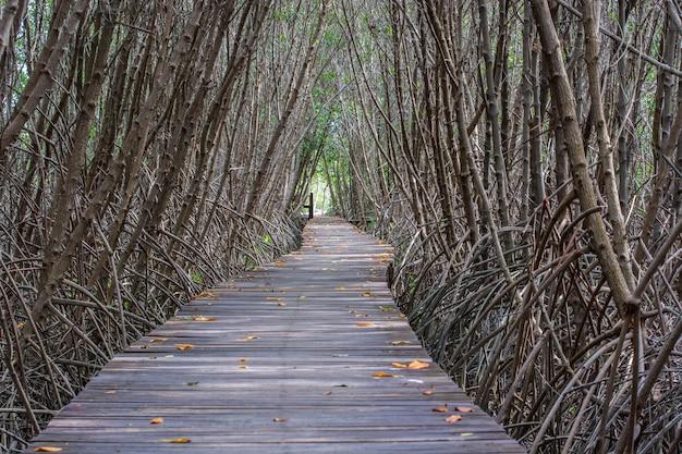 Drzewny tunel w namorzynowym lasowym natura śladzie przy laem phak bia petchaburi tajlandia