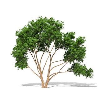 Drzewo 3d rendering na białym tle ma ścieżkę pracy.