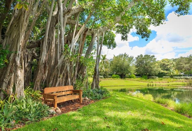 Drzewo banyan