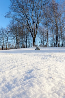 Drzewo bez liści zimą