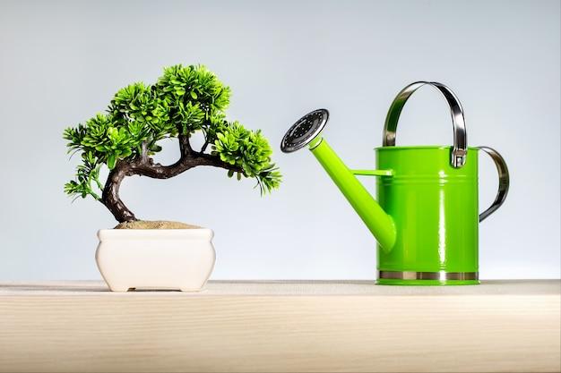 Drzewo bonsai i konewka na drewnianej półce z szarą ścianą.