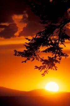 Drzewo douglas, montana