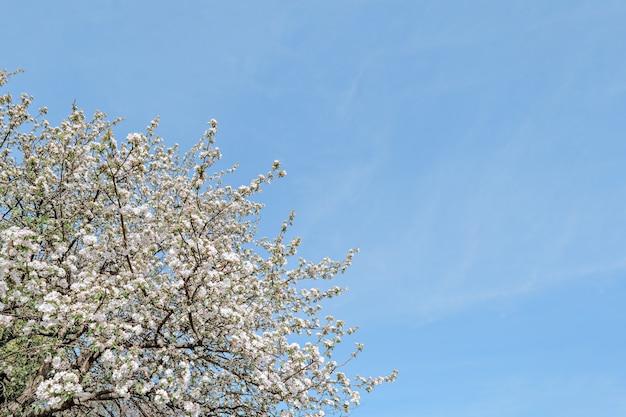 Drzewo dzikiej wiśni