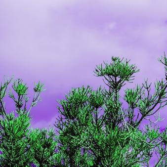 Drzewo i fioletowe niebo. minimalistyczny projekt artystyczny. tropikalna surrealistyczna moda