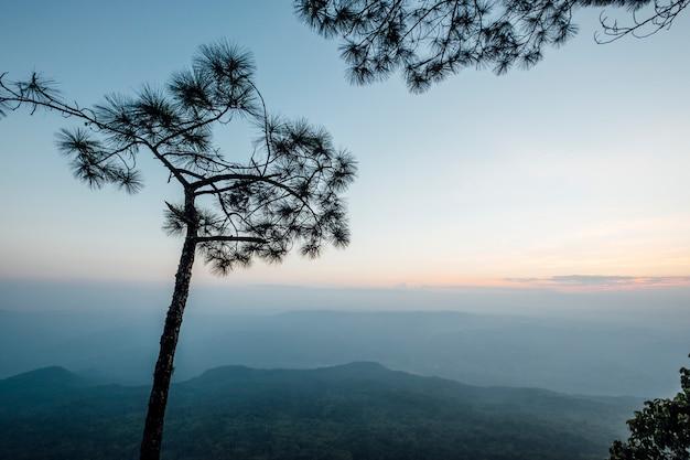 Drzewo i las w zachodzie słońca
