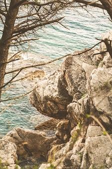 Drzewo i skała nad adriatykiem w czarnogórze