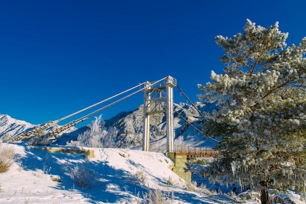 Drzewo iglaste pokryte jest czystym białym śniegiem na tle błękitnego nieba, ośnieżonymi szczytami górskimi i dużym mostem drogowym. pokryta śniegiem sosna w mroźny słoneczny dzień. zima w górach ałtaju