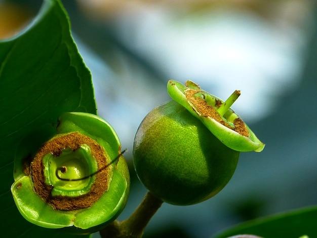 Drzewo jabłoni owoce róży liści roślin