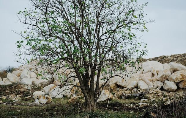 Drzewo kamienie góry krajobraz natura