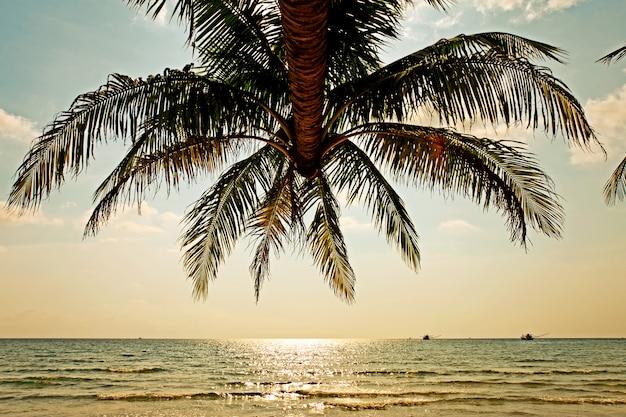 Drzewo kokosowe i niebo w tle